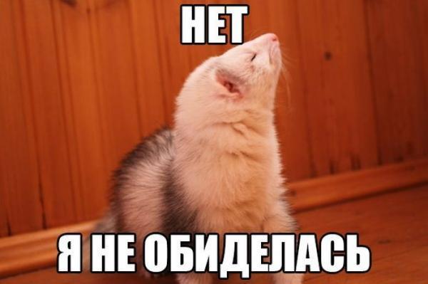 http://www.anekdotov-mnogo.ru/image-prikol//smeshnie_kartinki_142762005271.jpg