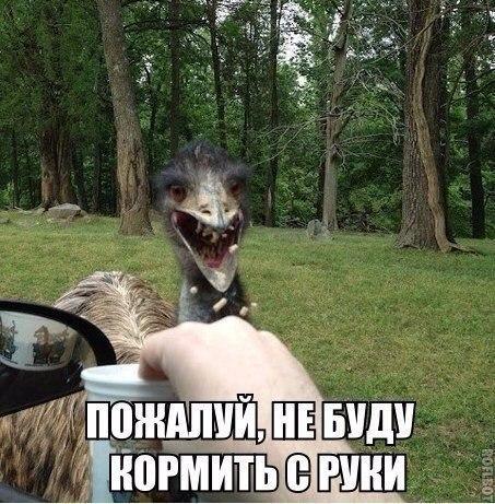 http://www.anekdotov-mnogo.ru/image-prikol//smeshnie_kartinki_143090910375.jpg