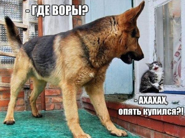 http://www.anekdotov-mnogo.ru/image-prikol//smeshnie_kartinki_143559751881.jpg