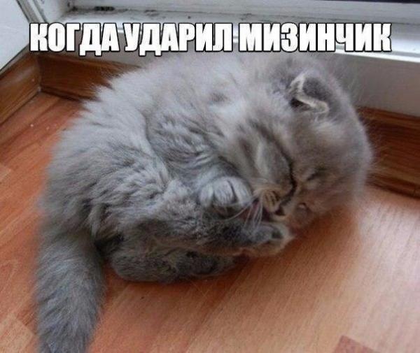 smeshnie_kartinki_144191041628.jpg