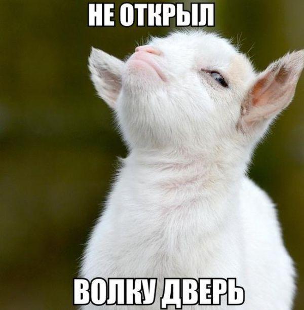 http://www.anekdotov-mnogo.ru/image-prikol//smeshnie_kartinki_14423335817.jpg