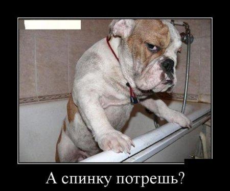 http://www.anekdotov-mnogo.ru/image-prikol//smeshnie_kartinki_144541602356.jpg