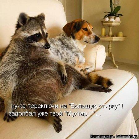 http://www.anekdotov-mnogo.ru/image-prikol//smeshnie_kartinki_144792679897.jpg