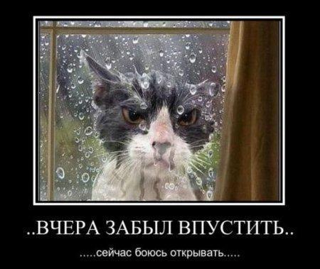 http://www.anekdotov-mnogo.ru/image-prikol//smeshnie_kartinki_144895235068.jpg