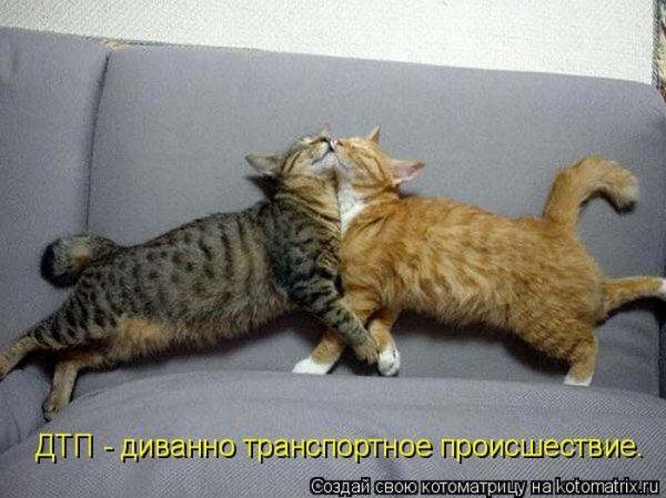 http://www.anekdotov-mnogo.ru/image-prikol//smeshnie_kartinki_1452589021100.jpg