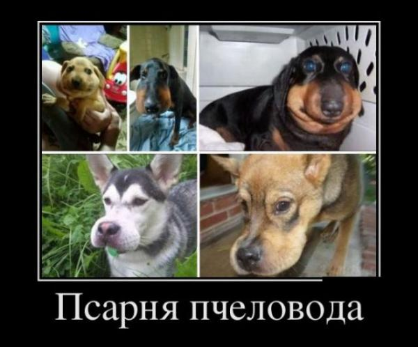 фото с собаками смешные