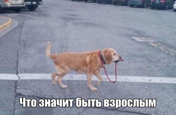 http://www.anekdotov-mnogo.ru/image-prikol//smeshnie_kartinki_146864474758.jpg