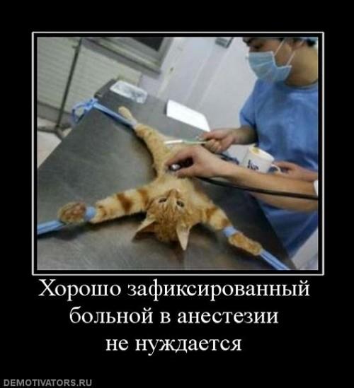 Vkontakte картинки для девушки на аву
