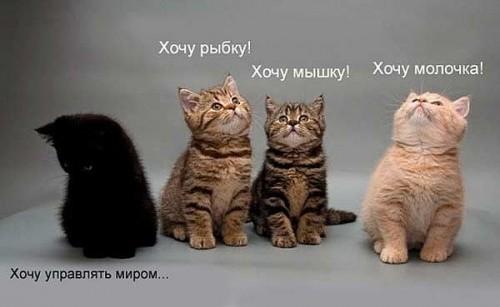 smeshnie_kartinki_1310059392.jpg