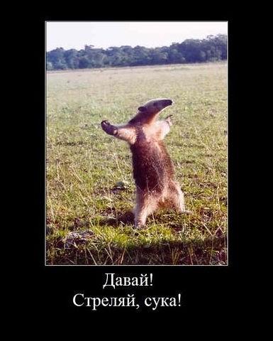 http://www.anekdotov-mnogo.ru/image-prikol/smeshnie_kartinki_1313175921.jpg