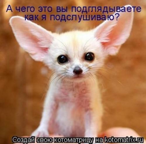 http://www.anekdotov-mnogo.ru/image-prikol/smeshnie_kartinki_1313189640.jpg