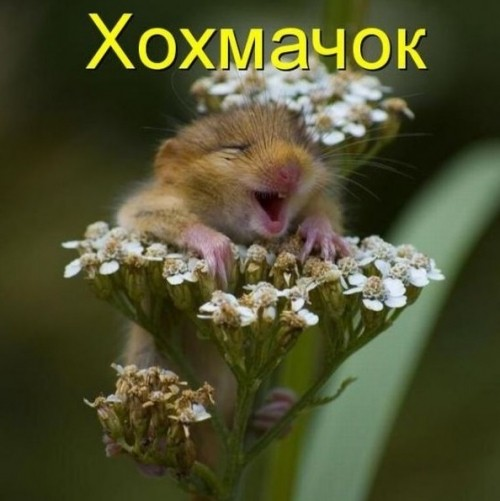 http://www.anekdotov-mnogo.ru/image-prikol/smeshnie_kartinki_1313823469.jpg