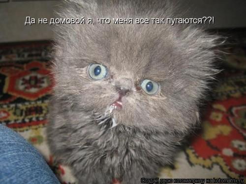 http://www.anekdotov-mnogo.ru/image-prikol/smeshnie_kartinki_1316954710.jpg