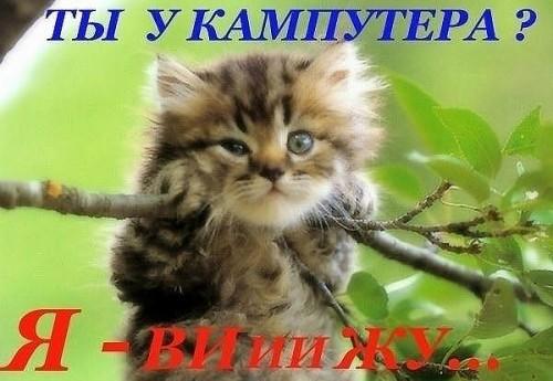 http://www.anekdotov-mnogo.ru/image-prikol/smeshnie_kartinki_1317758503.jpg