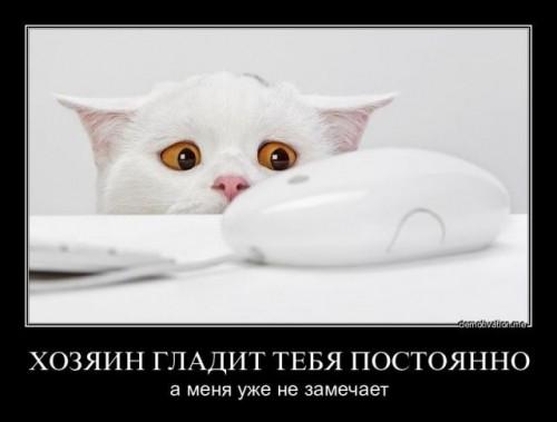 http://www.anekdotov-mnogo.ru/image-prikol/smeshnie_kartinki_1318168306.jpg