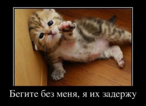 http://www.anekdotov-mnogo.ru/image-prikol/smeshnie_kartinki_1320164234.jpg