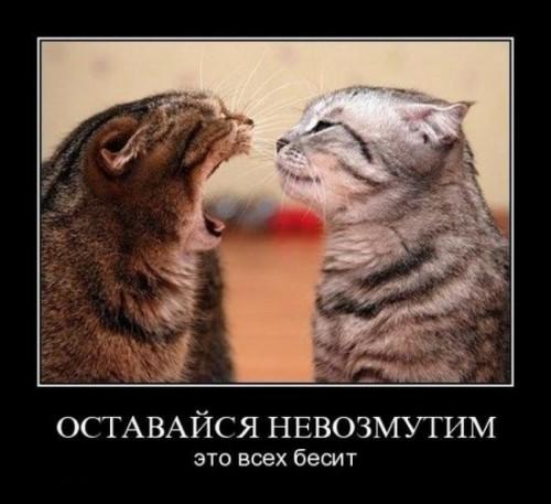http://www.anekdotov-mnogo.ru/image-prikol/smeshnie_kartinki_1321203161.jpg