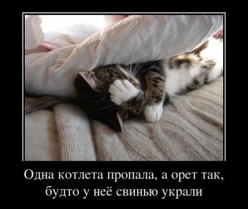 http://www.anekdotov-mnogo.ru/image-prikol/smeshnie_kartinki_133012741225022012.jpg