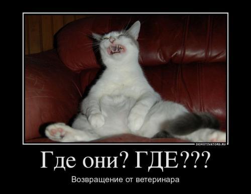 http://www.anekdotov-mnogo.ru/image-prikol/smeshnie_kartinki_133025664026022012.jpg