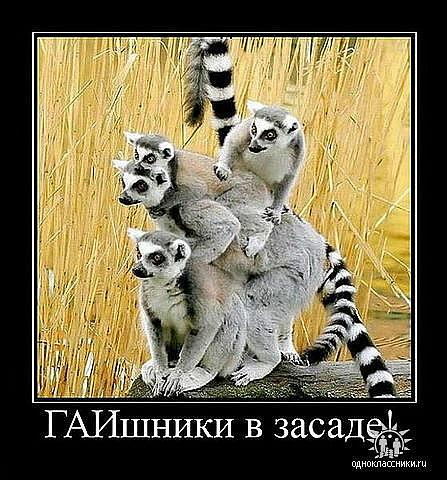 http://www.anekdotov-mnogo.ru/image-prikol/smeshnie_kartinki_133036730127022012.jpg