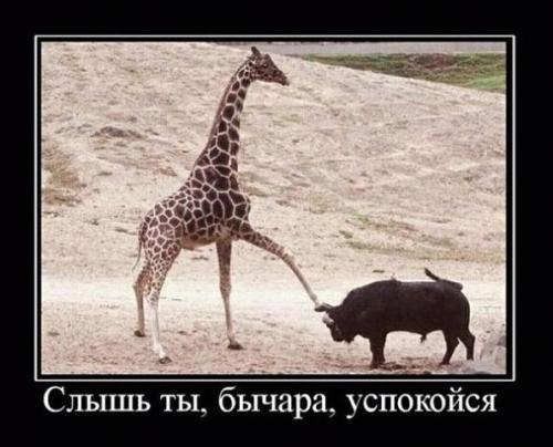 http://www.anekdotov-mnogo.ru/image-prikol/smeshnie_kartinki_133087209404032012.jpg