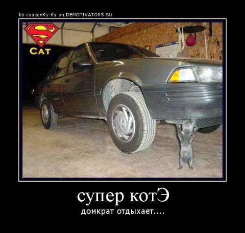 http://www.anekdotov-mnogo.ru/image-prikol/smeshnie_kartinki_133179741715032012.jpg