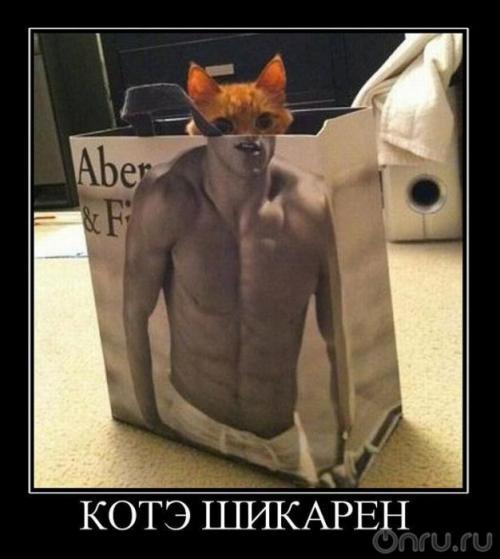 http://www.anekdotov-mnogo.ru/image-prikol/smeshnie_kartinki_133252023923032012.jpg