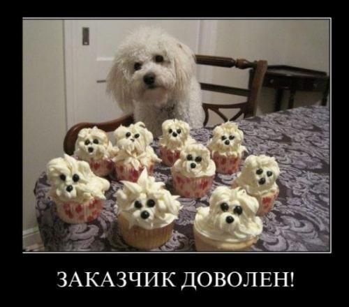 http://www.anekdotov-mnogo.ru/image-prikol/smeshnie_kartinki_133268043625032012.jpg