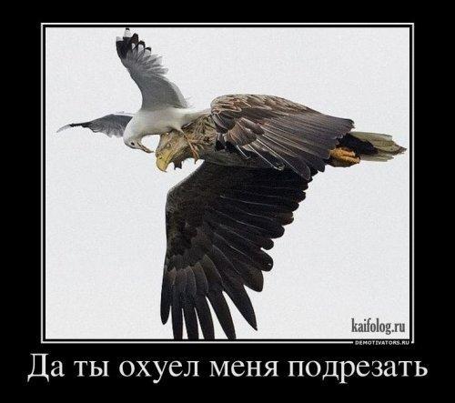 http://www.anekdotov-mnogo.ru/image-prikol/smeshnie_kartinki_133311979530032012.jpg