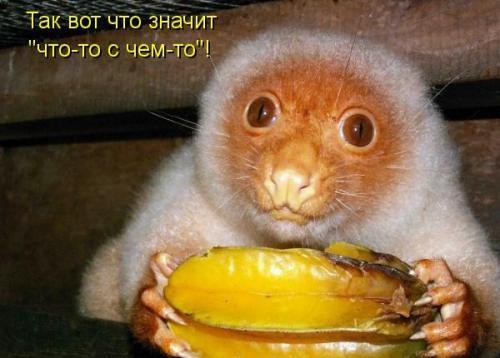 http://www.anekdotov-mnogo.ru/image-prikol/smeshnie_kartinki_133387535508042012.jpg