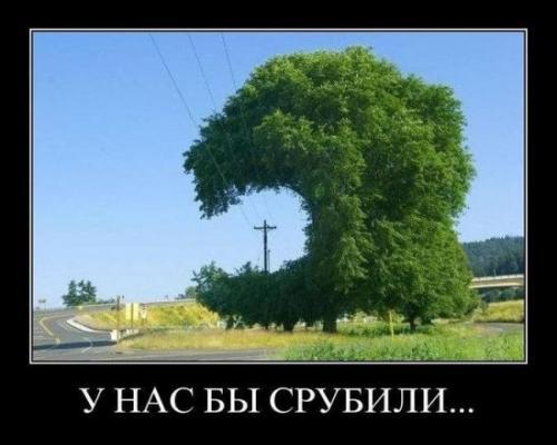 http://www.anekdotov-mnogo.ru/image-prikol/smeshnie_kartinki_133493275320042012.jpg