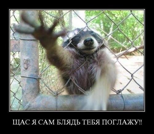 http://www.anekdotov-mnogo.ru/image-prikol/smeshnie_kartinki_133510440622042012.jpg