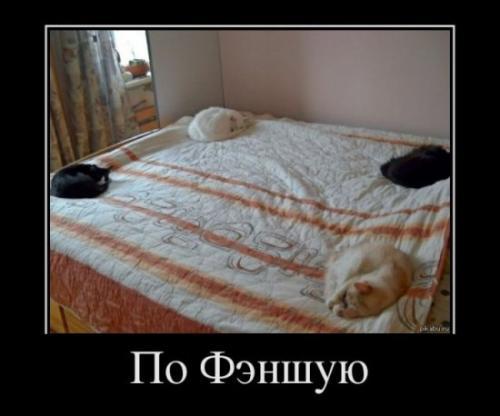 http://www.anekdotov-mnogo.ru/image-prikol/smeshnie_kartinki_133555480127042012.jpg