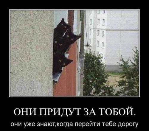 http://www.anekdotov-mnogo.ru/image-prikol/smeshnie_kartinki_133646640108052012.jpg