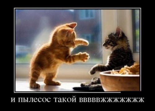 http://www.anekdotov-mnogo.ru/image-prikol/smeshnie_kartinki_133666714410052012.jpg