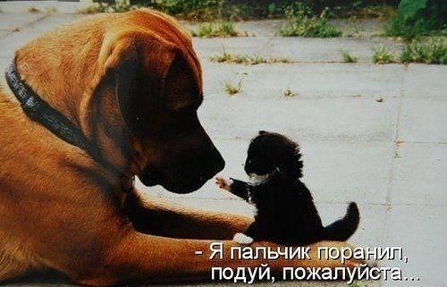 http://www.anekdotov-mnogo.ru/image-prikol/smeshnie_kartinki_133684376012052012.jpg