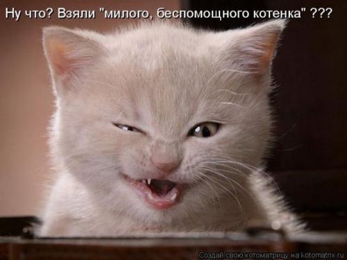 http://www.anekdotov-mnogo.ru/image-prikol/smeshnie_kartinki_133686154313052012.jpg