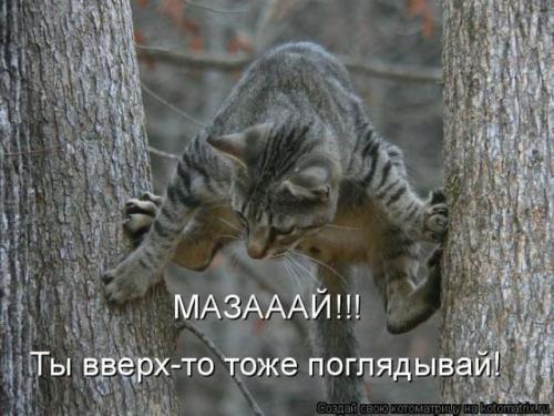 http://www.anekdotov-mnogo.ru/image-prikol/smeshnie_kartinki_133686156213052012.jpg