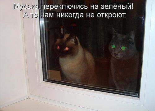http://www.anekdotov-mnogo.ru/image-prikol/smeshnie_kartinki_133686187113052012.jpg