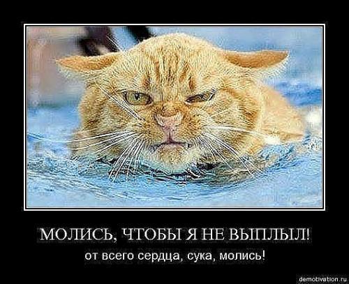http://www.anekdotov-mnogo.ru/image-prikol/smeshnie_kartinki_133686194913052012.jpg