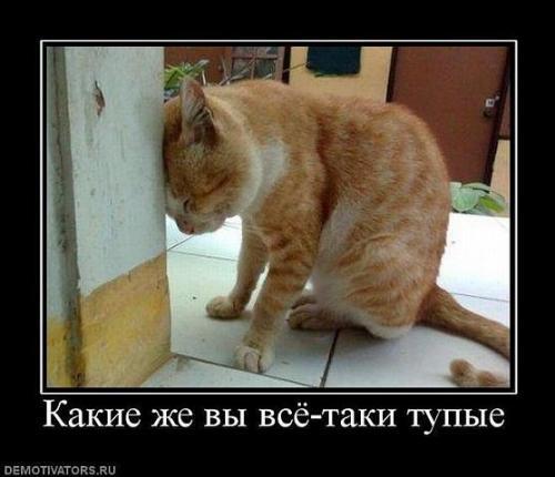 http://www.anekdotov-mnogo.ru/image-prikol/smeshnie_kartinki_133686198613052012.jpg