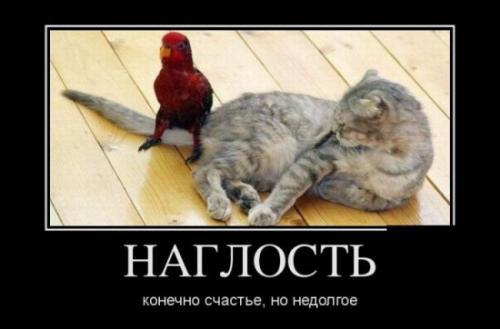 http://www.anekdotov-mnogo.ru/image-prikol/smeshnie_kartinki_133693070113052012.jpg
