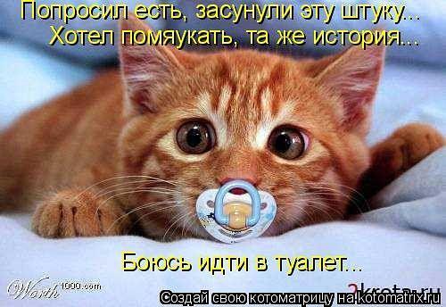 http://www.anekdotov-mnogo.ru/image-prikol/smeshnie_kartinki_133693099013052012.jpg