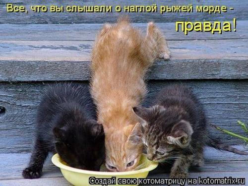 http://www.anekdotov-mnogo.ru/image-prikol/smeshnie_kartinki_133693499913052012.jpg