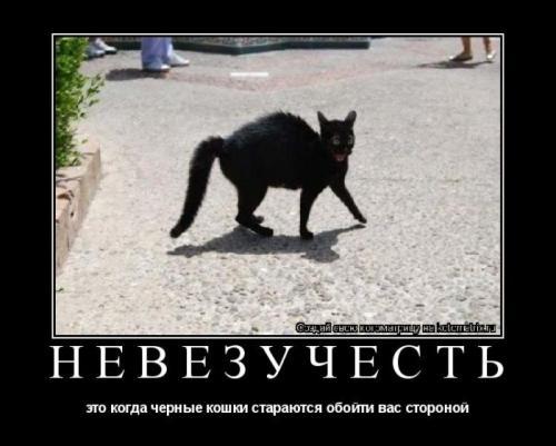 http://www.anekdotov-mnogo.ru/image-prikol/smeshnie_kartinki_133693977514052012.jpg