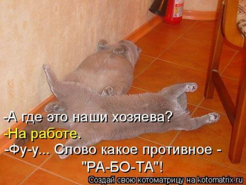 http://www.anekdotov-mnogo.ru/image-prikol/smeshnie_kartinki_133701723014052012.jpg
