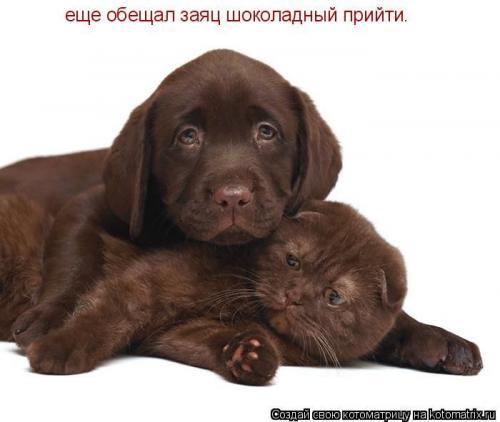 http://www.anekdotov-mnogo.ru/image-prikol/smeshnie_kartinki_133701733714052012.jpg