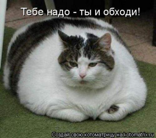 http://www.anekdotov-mnogo.ru/image-prikol/smeshnie_kartinki_133701738314052012.jpg