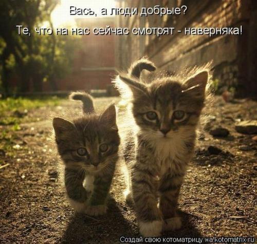 http://www.anekdotov-mnogo.ru/image-prikol/smeshnie_kartinki_133701740514052012.jpg