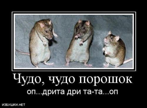 http://www.anekdotov-mnogo.ru/image-prikol/smeshnie_kartinki_133726796917052012.jpg